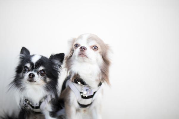 愛犬のマーキング行為の意味は何??