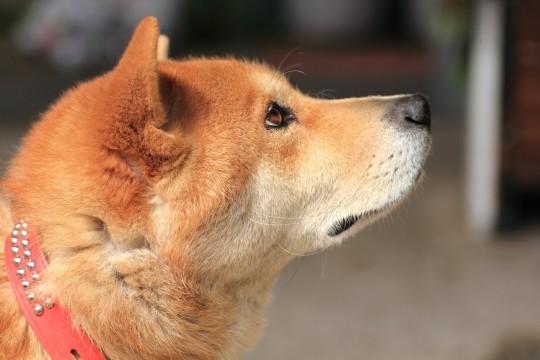 犬の腸内細菌 ~わんちゃんのお腹の中はどうなっているの?~