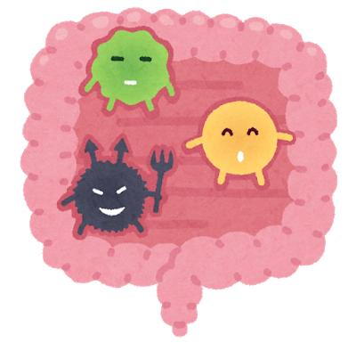 犬の腸内細菌の種類