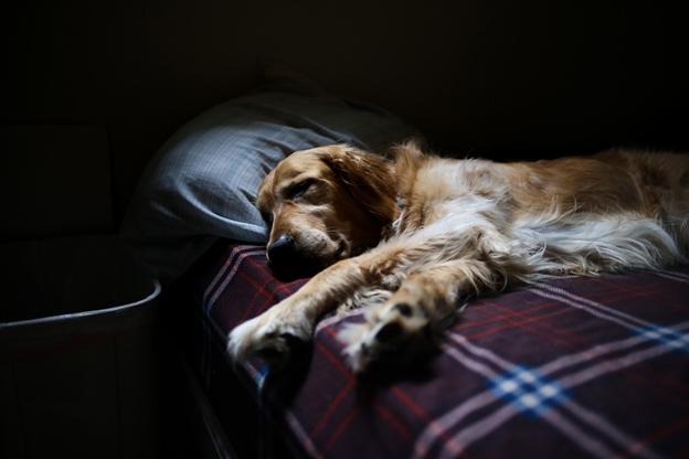 ペットの老衰とは?愛犬の最期のときに飼い主さんができること