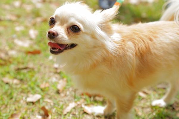 愛玩動物飼養管理士試験の難易度、勉強方法とは…!?