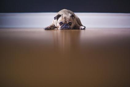 愛犬のストレス事情