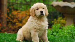 早期発見・早期治療が大事! 愛犬の病気のサインを見逃さないコツ