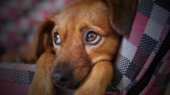 ペット(犬)の涙やけとは?なりやすい犬種や原因、予防法について