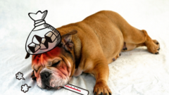 犬の腸内環境を整えるアイテム! ~サプリメントを賢く利用しよう~