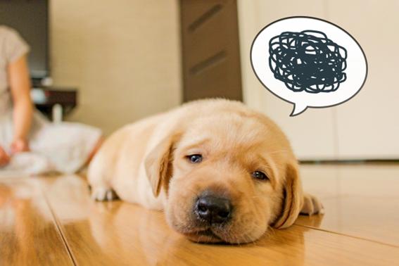 犬の腸内環境を知っておこう