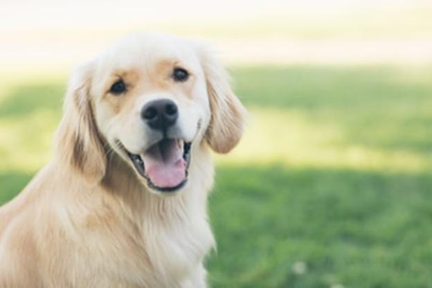 犬の歯石除去にはどんな方法がある?3つの方法をご紹介します!