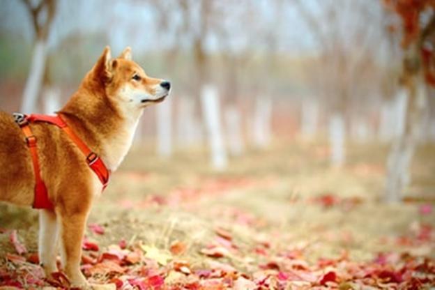 犬の散歩で注意すべきポイントとは?愛犬との散歩を楽しむために