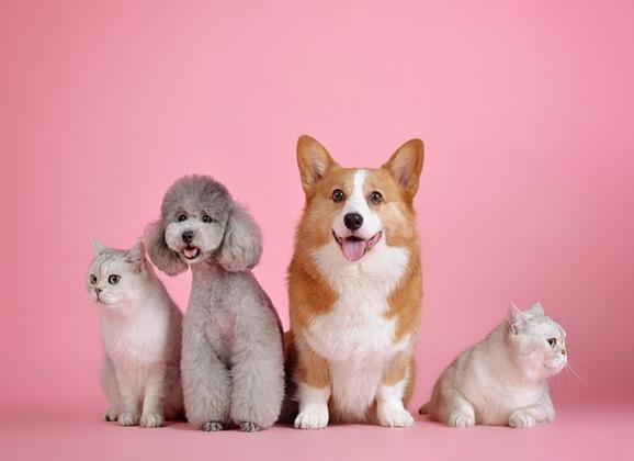 あなたは知ってますか??犬の発情期事情