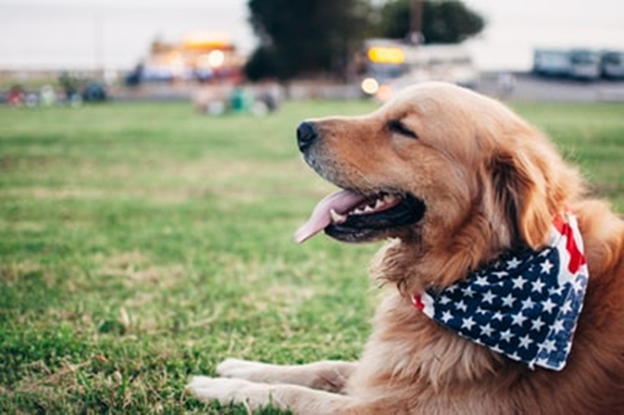 犬の散歩にはこつがある!愛犬との散歩を楽しむための方法をご紹介