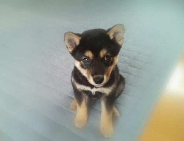 ペット先進国ドイツに学ぶ、ドイツ愛護及び動物愛護センターの実態!!