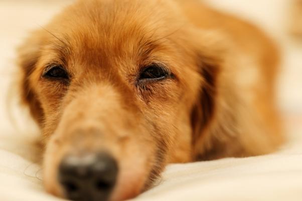 ドイツで犬を飼う人には義務付けられている?ドイツの犬税