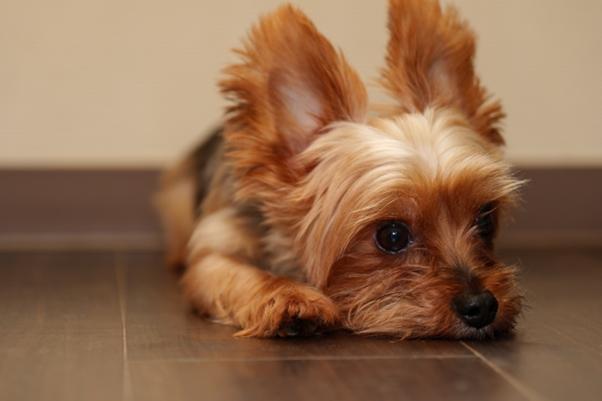 犬税の使い道は?
